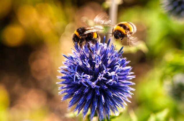 Droom betekenis van bijen