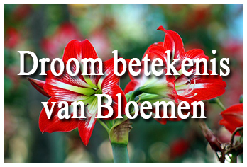 Droom betekenis van bloemen