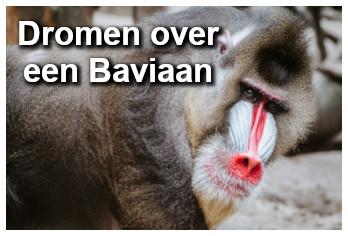 Droom betekenis van een baviaan