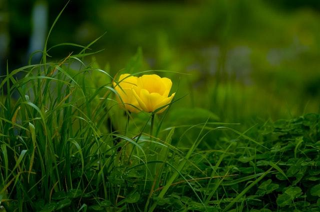 Droom betekenis van gras