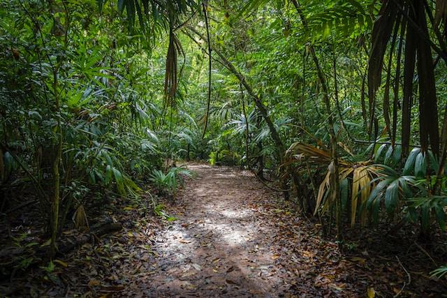 Droom betekenis van een jungle - oerwoud
