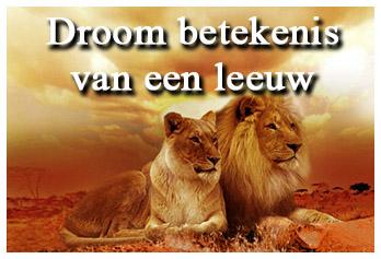 Droom betekenis van een leeuw