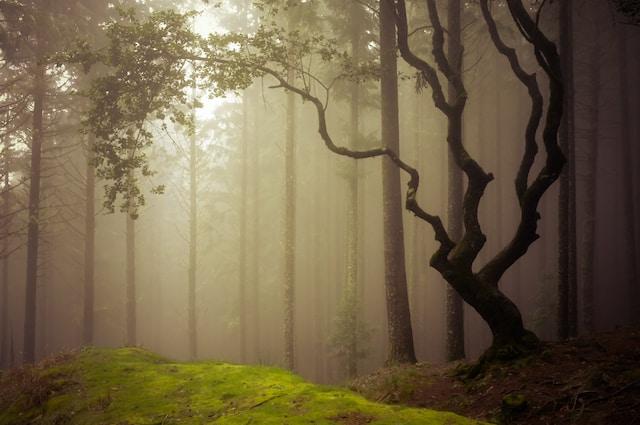 Droom betekenis van mist