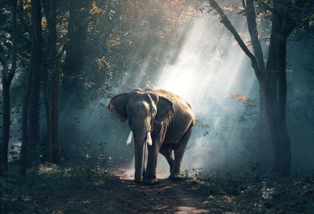 Droom betekenis van een olifant
