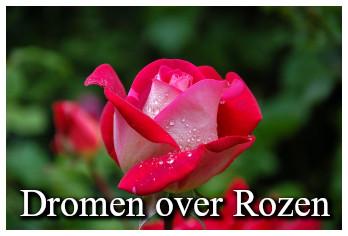 Droom betekenis van rozen
