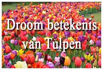 Droom betekenis van tulpen