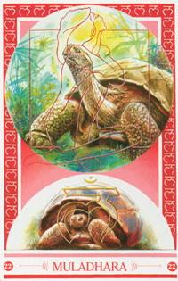 Medicijnkaart Schildpad van Muladhara