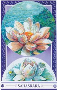 Chakra kaart Open Lotus van Sahasrara