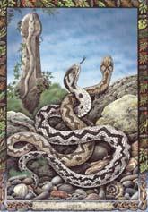 Dieren orakelkaart De Adder (Nathair)