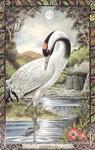 Dieren orakelkaart De Kraanvogel (Corr)