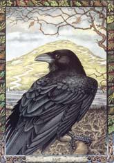 Dieren orakelkaart De Raaf (Bran)