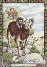 Dieren orakelkaart De Ram (Reithe)