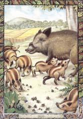 Dieren orakelkaart De Zeug (Muc)