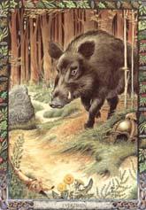 Dieren orakelkaart Everzwijn (Torc)