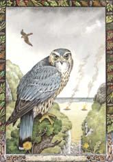 Dieren orakelkaart Havik (Seabhac)