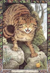Dieren orakelkaart Kat (Cat)