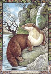 Dieren orakelkaart Otter (Dobhran)