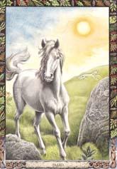 Dieren orakelkaart Paard (Each)