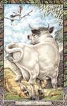 Dieren orakelkaart Stier (Tarbh)