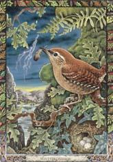 Dieren orakelkaart Winterkoninkje (Drui-en)