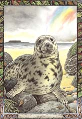 Dieren orakelkaart Zeehond (Ron)